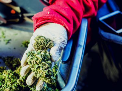 Cannabis Industry Amidst COVID-19